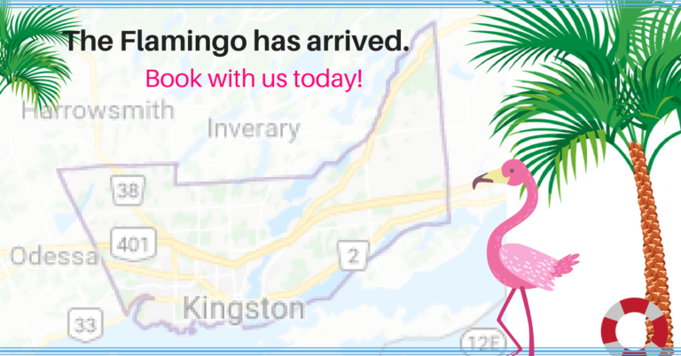 The Flamingo has arrived in Kingston! (2)